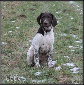 Ebby z Golštýnů